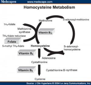 Homocysteine Pathway